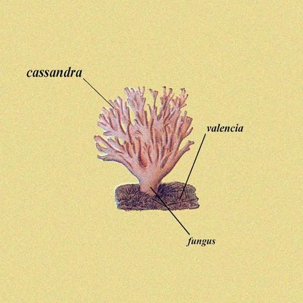 cassandra valencia