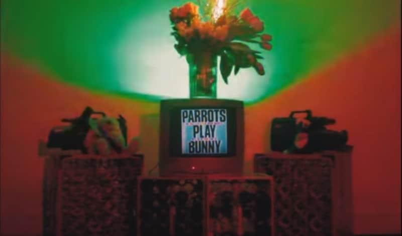 parrots bad bunny