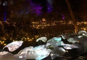 Naturaleza Encendida - Así es la experiencia del Jardín Botánico | Reseña