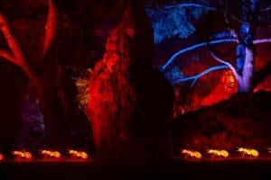 naturaleza encendida palmetum