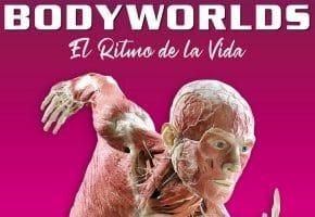 Body Worlds en Madrid - 2021 y 2022 - Horarios y entradas IFEMA