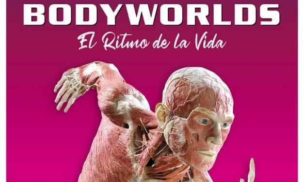 Body Worlds en Madrid – 2021 y 2022 – Horarios y entradas IFEMA
